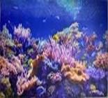 Коралловый риф панно 602*1002 мм
